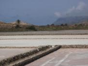 Biodiversidad en las Salinas del Rasall
